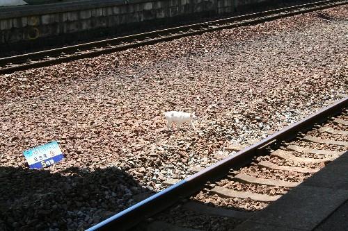 浦上駅の猫