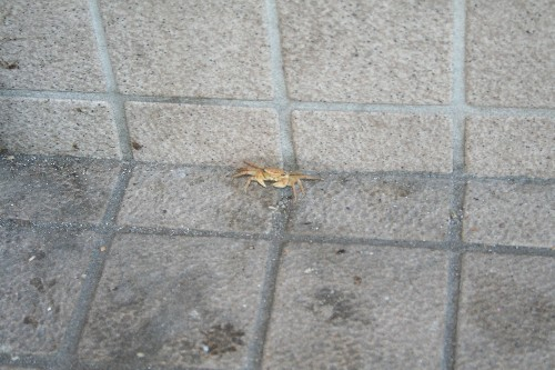 岩松駅のカニ