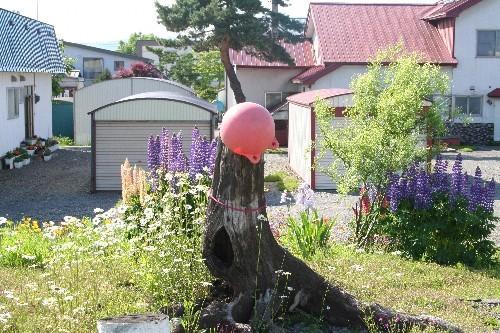 風連駅の木